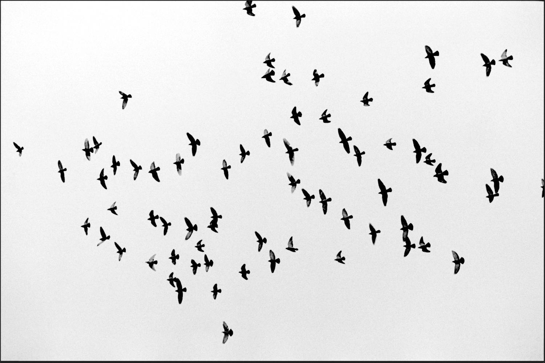 birds in the sky copy 2.jpg