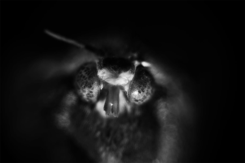 Moth_copy.jpg