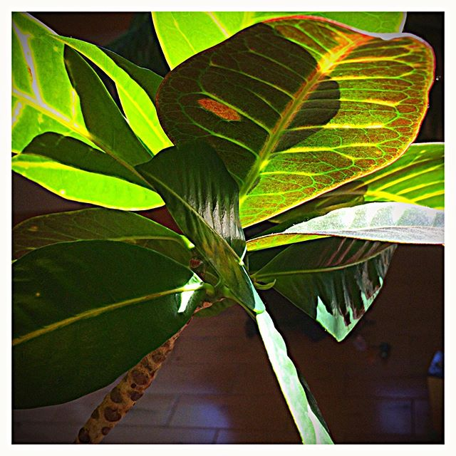 #shadows #light #sunlight #houseplant #happy #sun