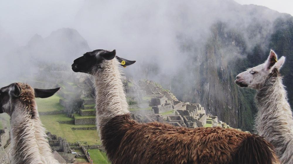 And finally atop Machu Picchu making friends
