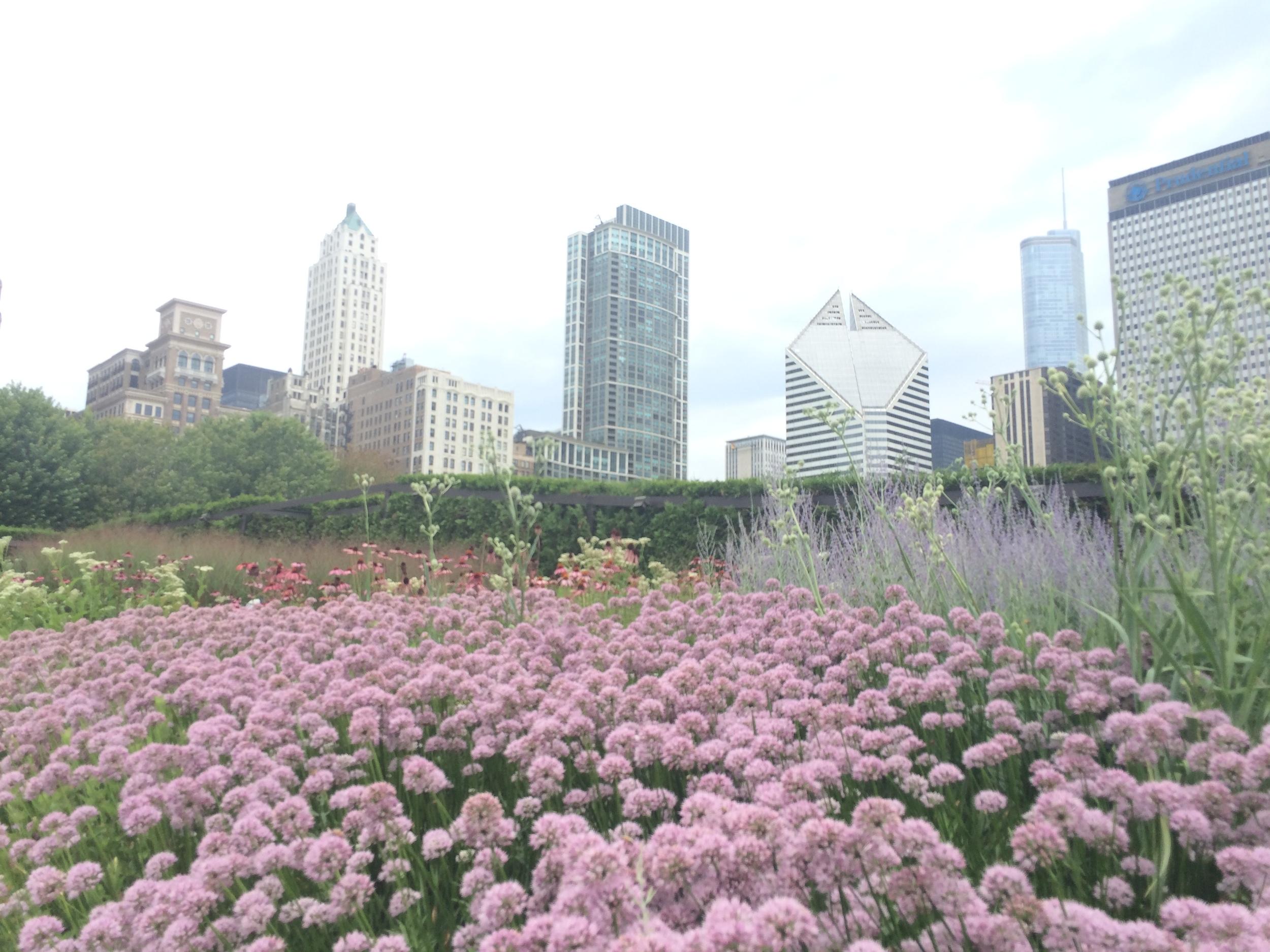 O   Lurie Garden   fica logo depois do  The Bean  e da Concha Acústica do Millennium Park, entre eles e o Art Institute. Tem de ficar atento pra ver a entradinha pra ele, que parece um labirinto. E lá estavam flores de todos os tipos, insetos e gente, tudo isso aliado a um clima gostoso nem frio e nem calor demais.