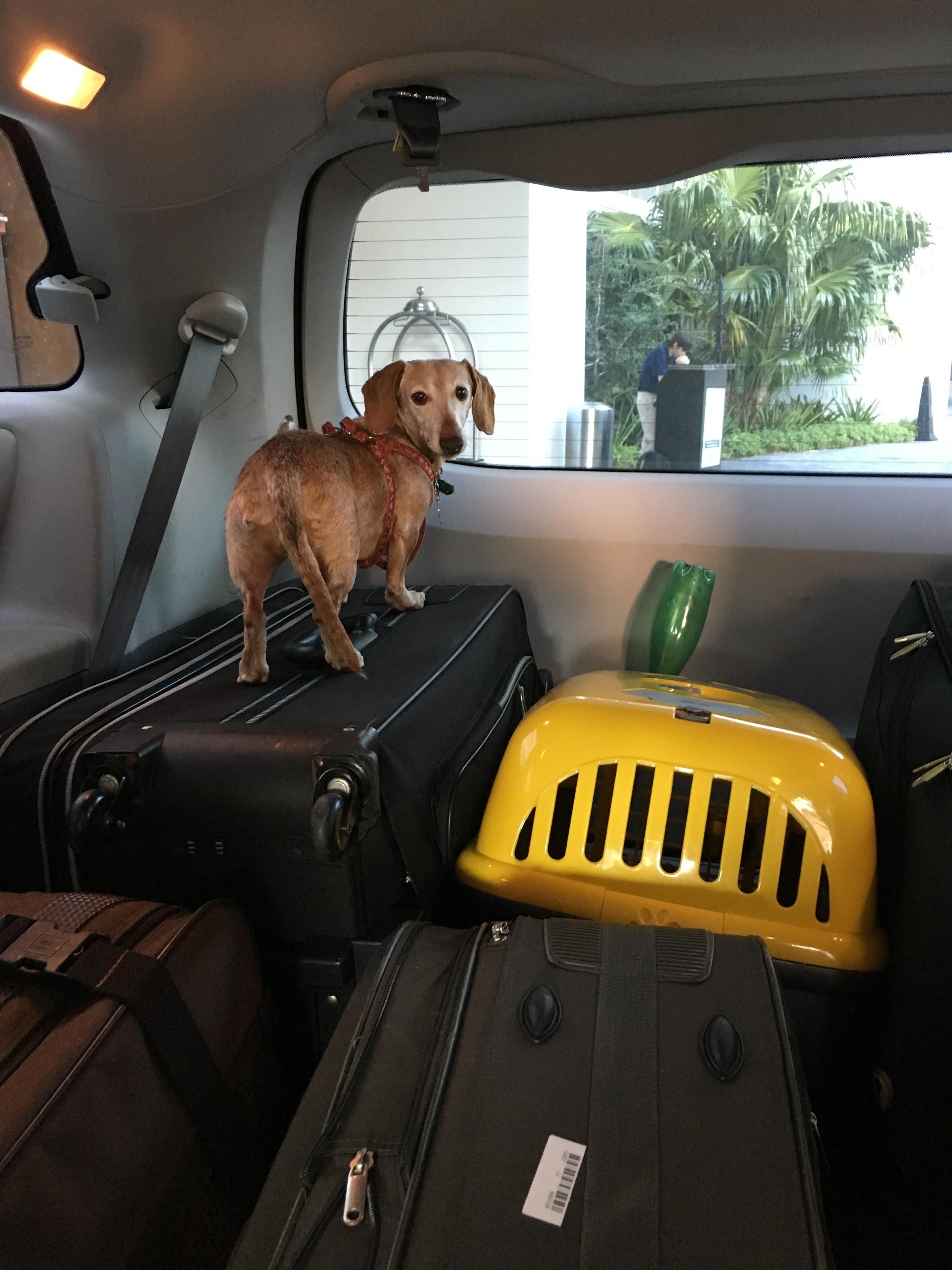 Jurema, em sua primeira aparição no Blog. Ainda em Miami, já estávamos empacotados, rumo ao aeroporto.