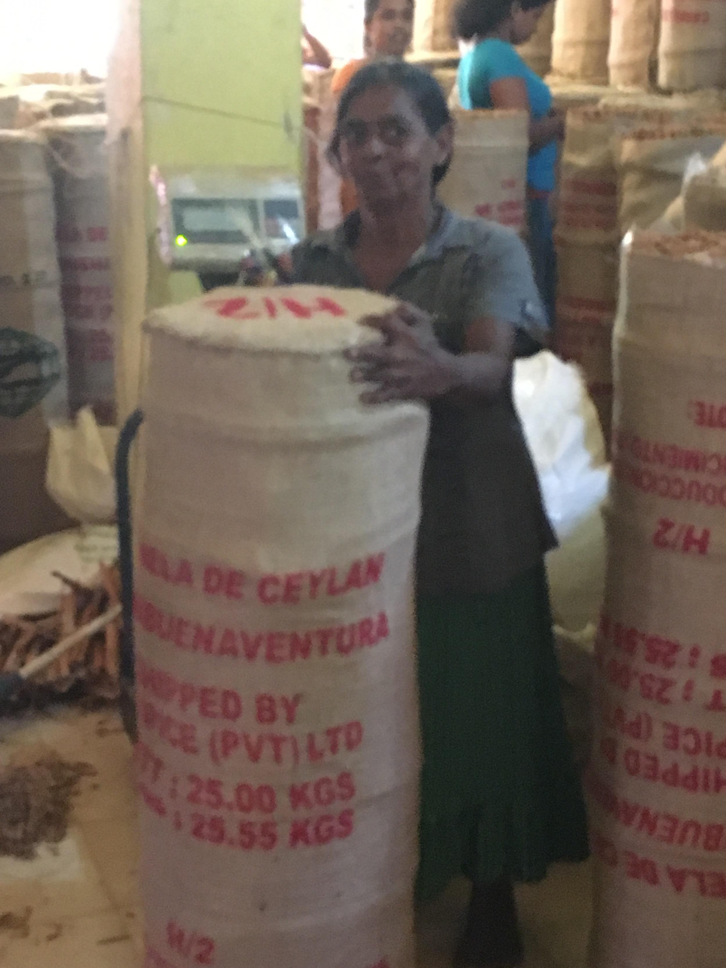 Todo o processo feito na fazenda é artesanal. Funcionando como uma cooperativa, os funcionários ganham seus salários como num sistema de distribuição de lucros. Aqui, as senhorinhas que costuram as embalagens de socos de sisal para exportação. 25 quilos de canela!