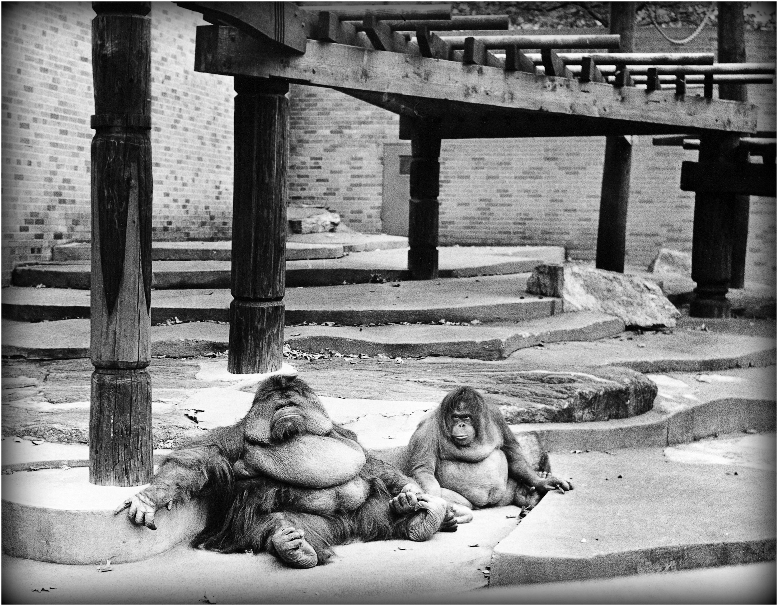"""There's No Place Like Home"" - at the Bronx Zoo, 1962."