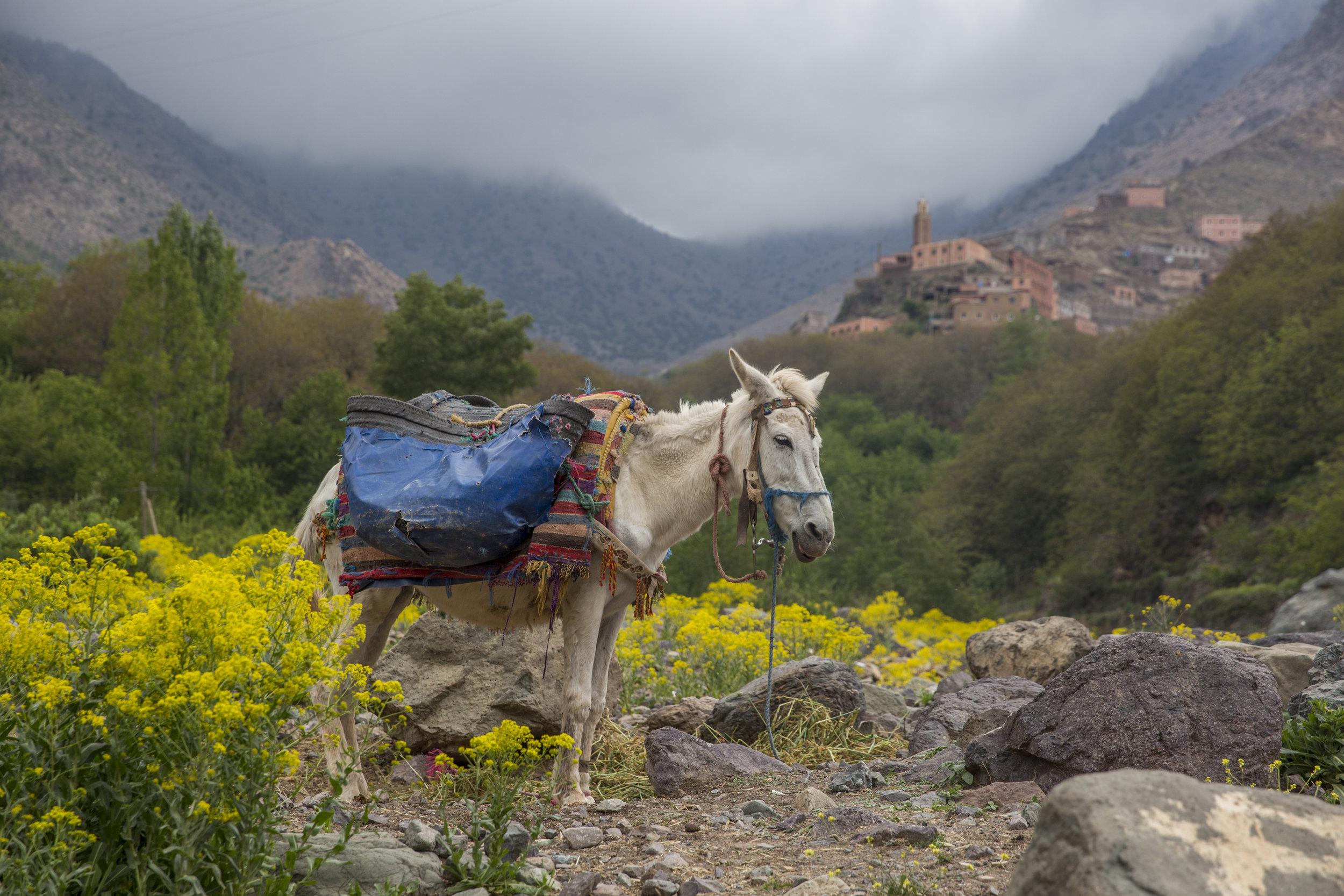 Morocco-11-2.jpg