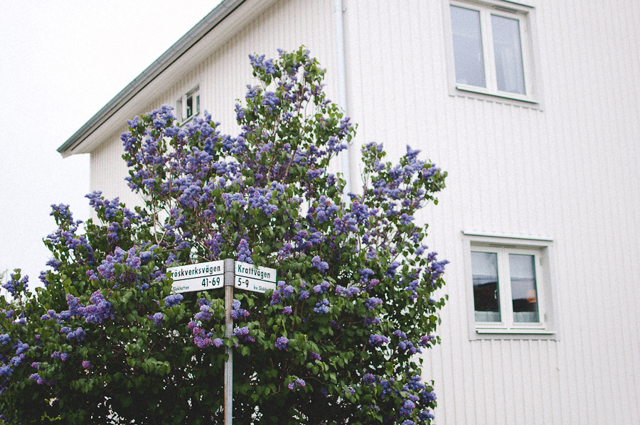 Stockholm-Marta-Vargas-Walk_2.jpg