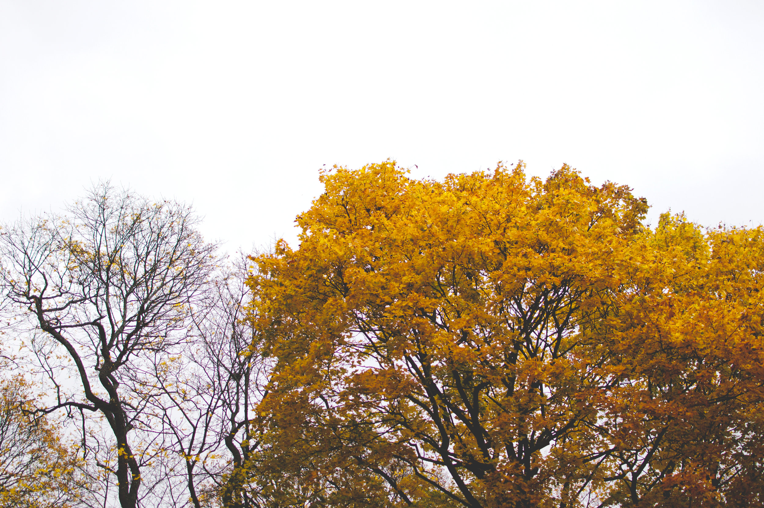marta-vargas-autumn-stockholm-4375.jpg
