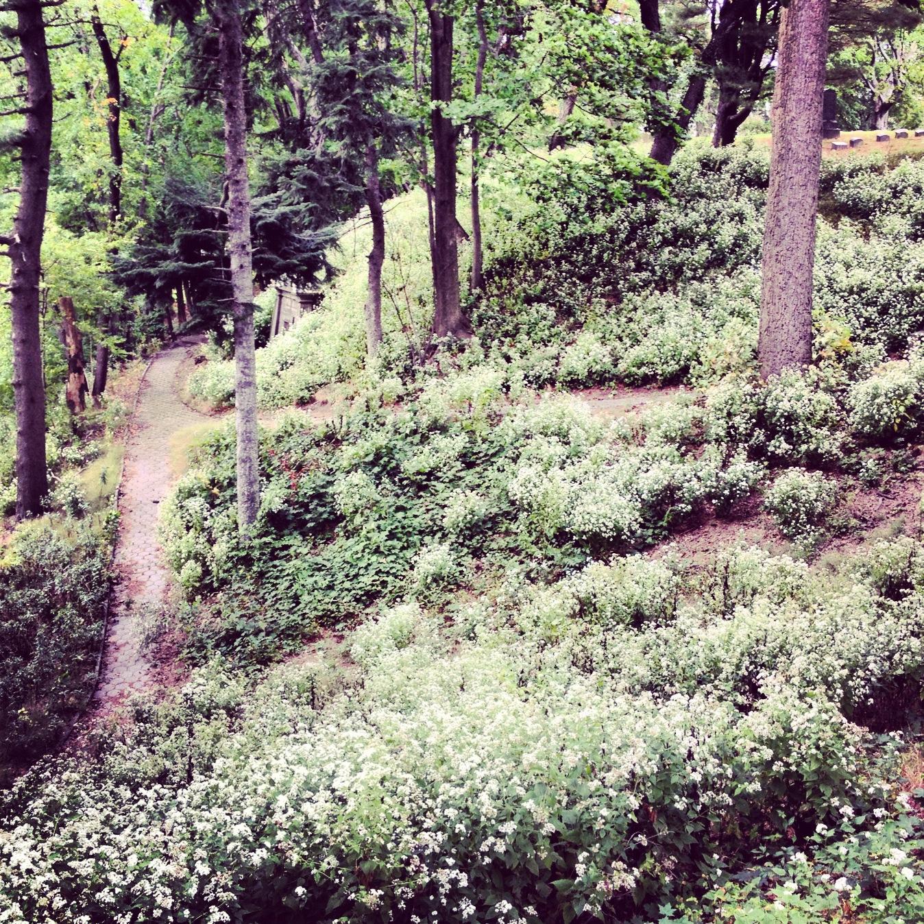 green slope, photo by Maré Hieronimus