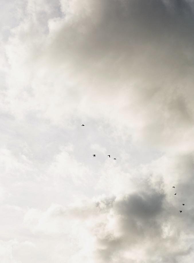 April 4th - Birds in the sky