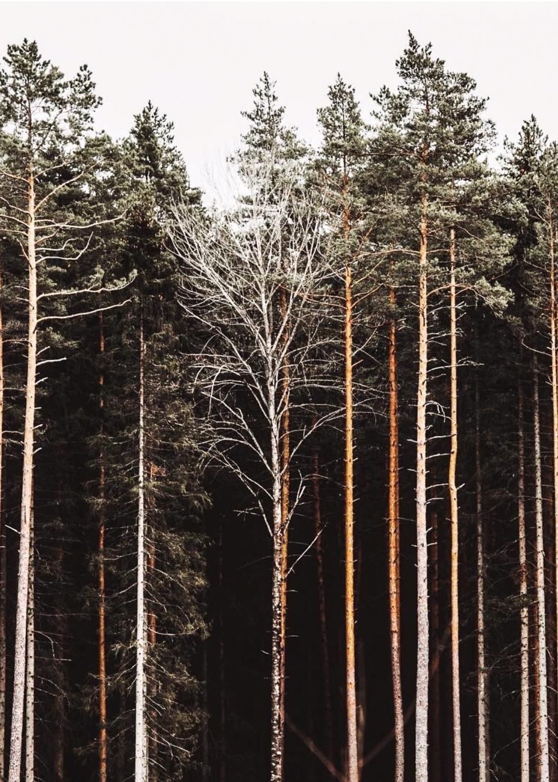 April 17th - Tall, skinny trees