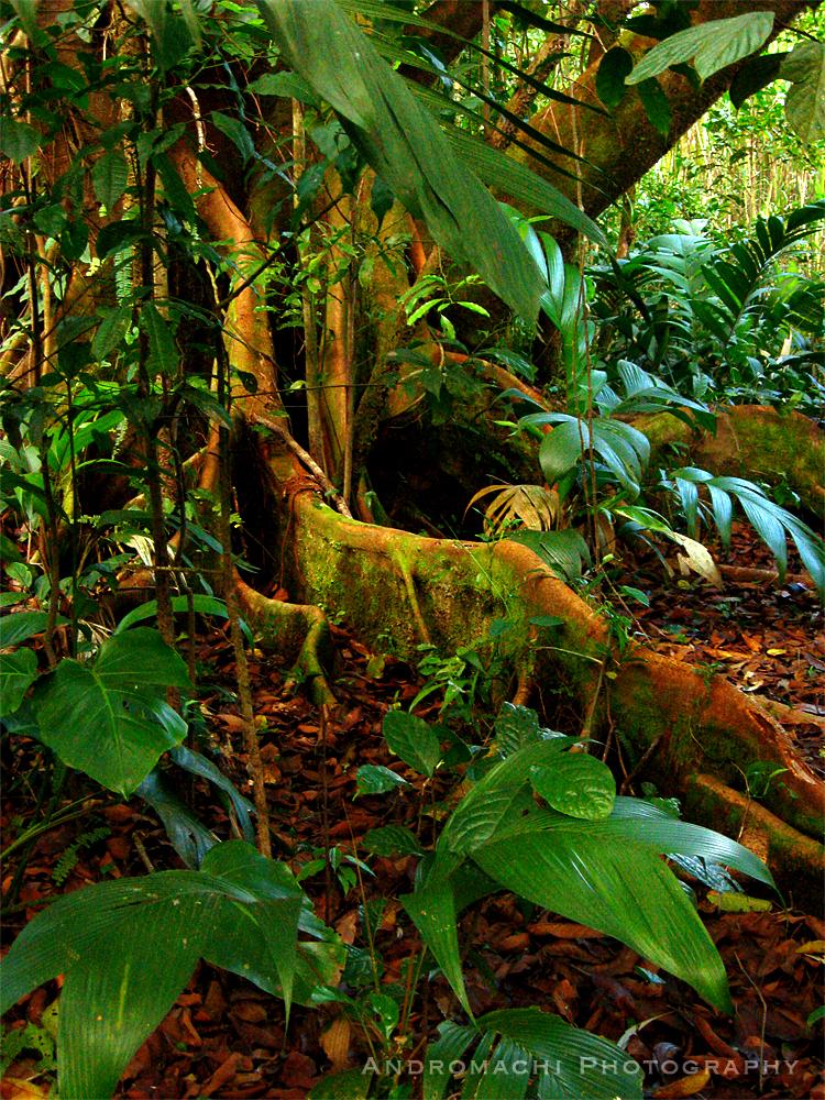 in Costa Rica's jungles