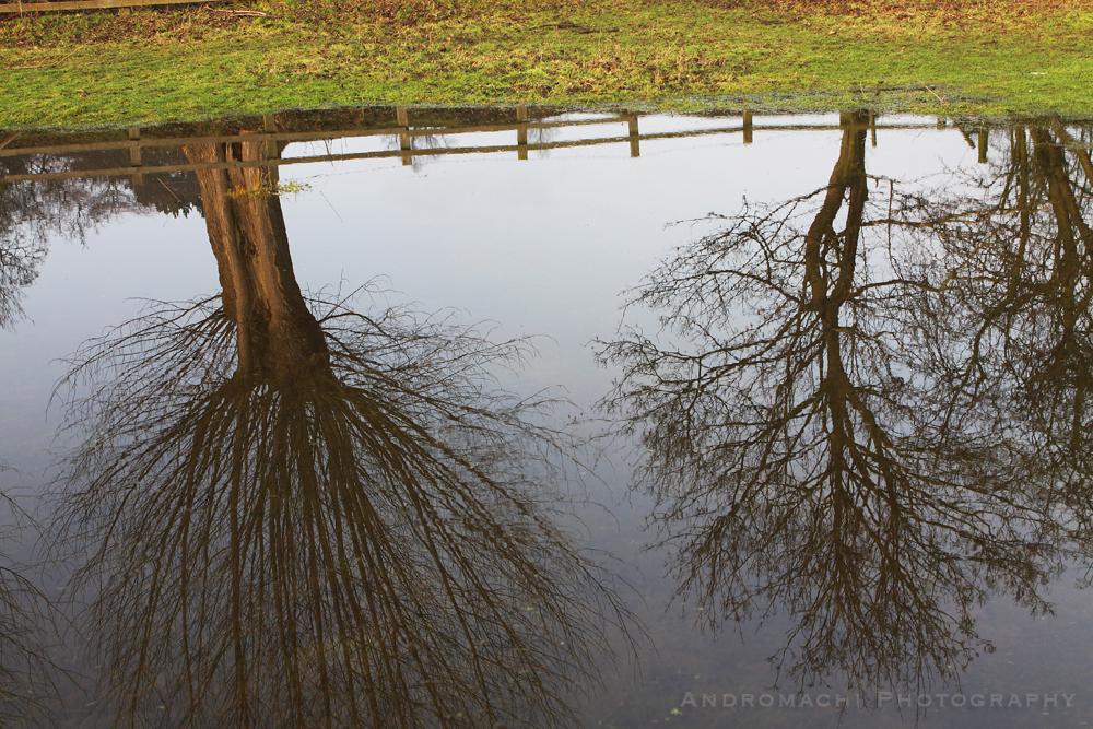 a walk after the rain, York, UK