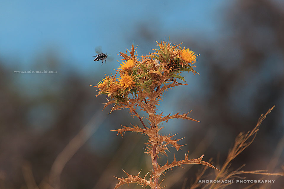 The flora of Lefkada