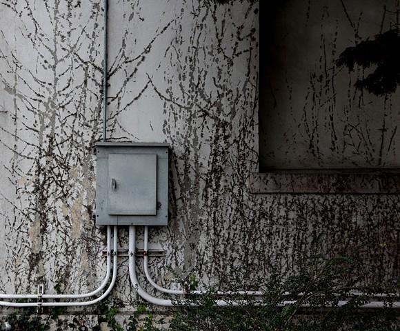Presidio Electrical Box, San Francisco, CA