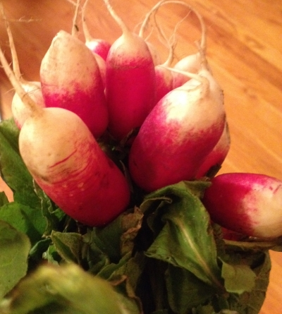 French breakfast radishes