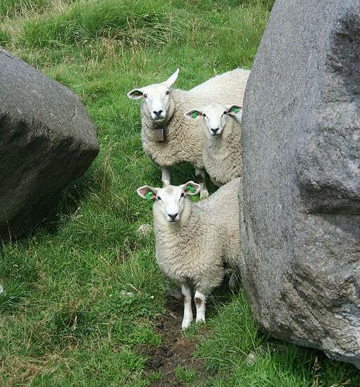 energia sheep wool insulation