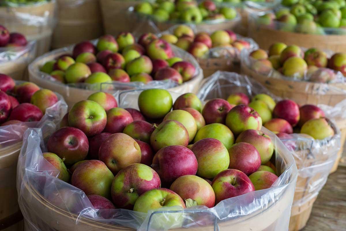 grey apples.jpg