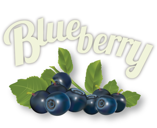 blueberry-01.png