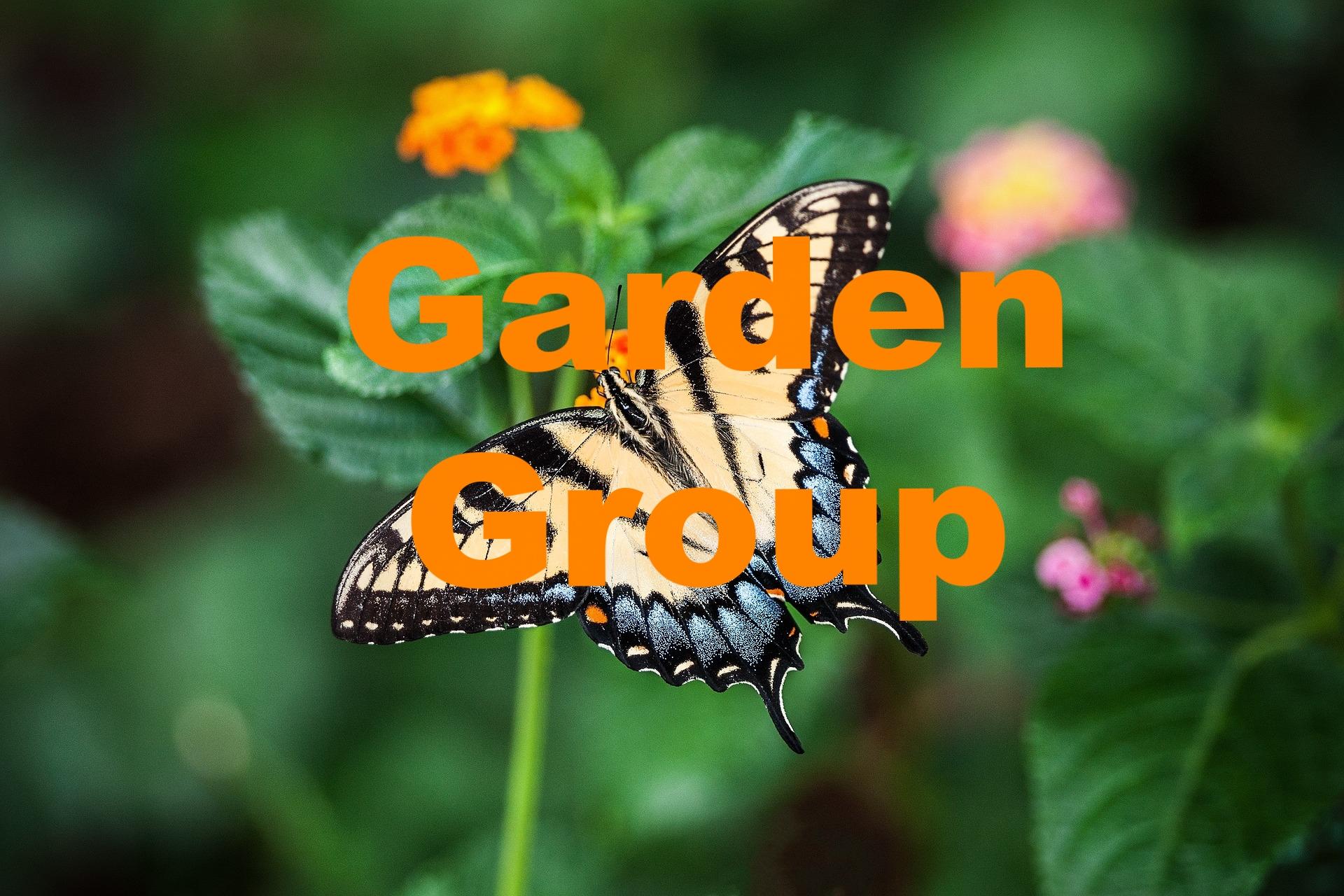 butterfly-1391809_1920.jpg