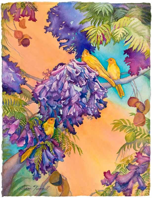 Saffron Finches on the Jacaranda Tree