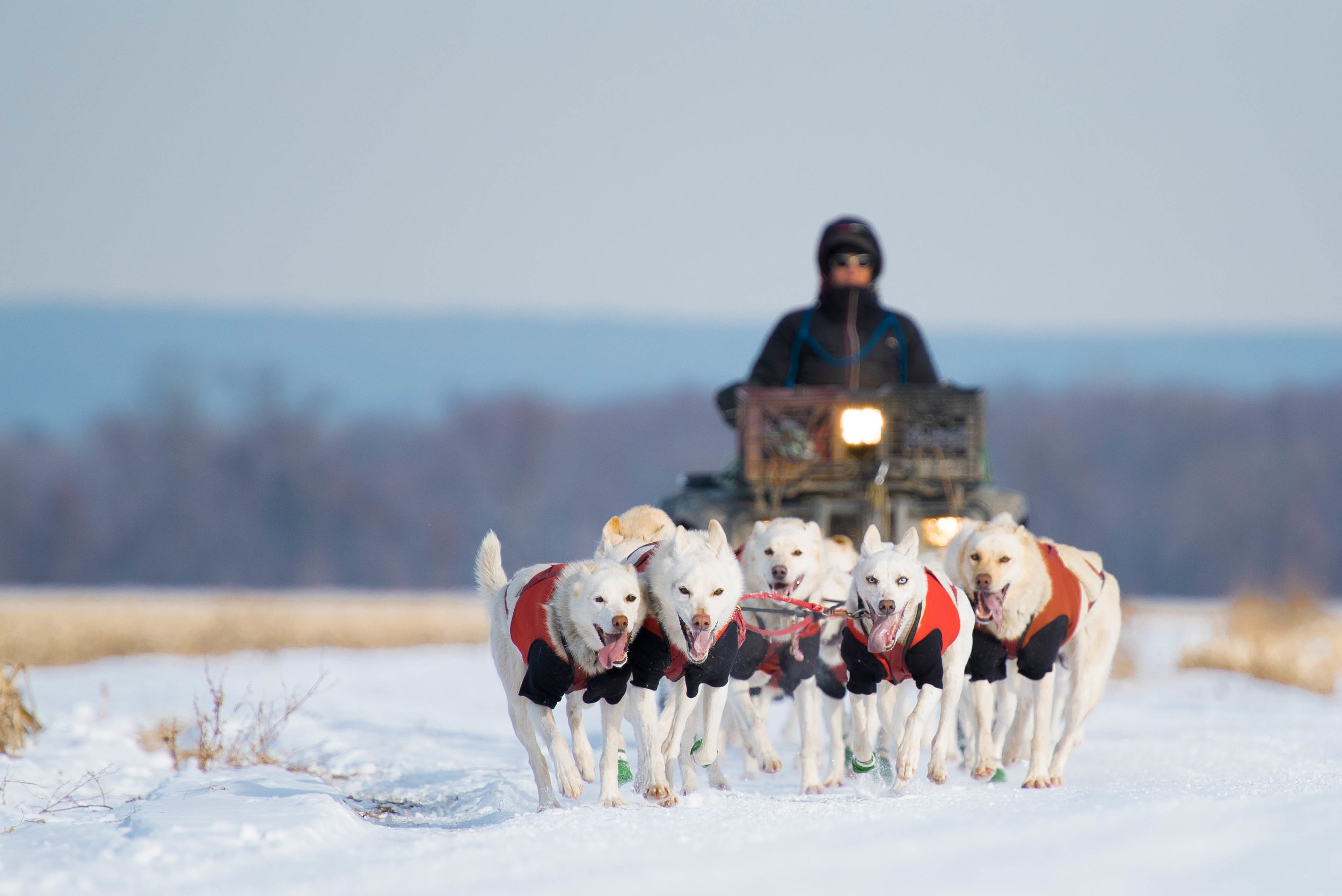 Marla Brodsky and her team of Alaskan Huskies from Hilltown Sleddogs train in Western Massachusetts for the 250 mile Can-Am Crown International Race in Maine. Brodsky has dedicated her life to her mushing since she observed the sport while traveling in Alaska during 2007.  Living entirely off the grid with her 22 dogs, she is determined to cross the finish line this March.