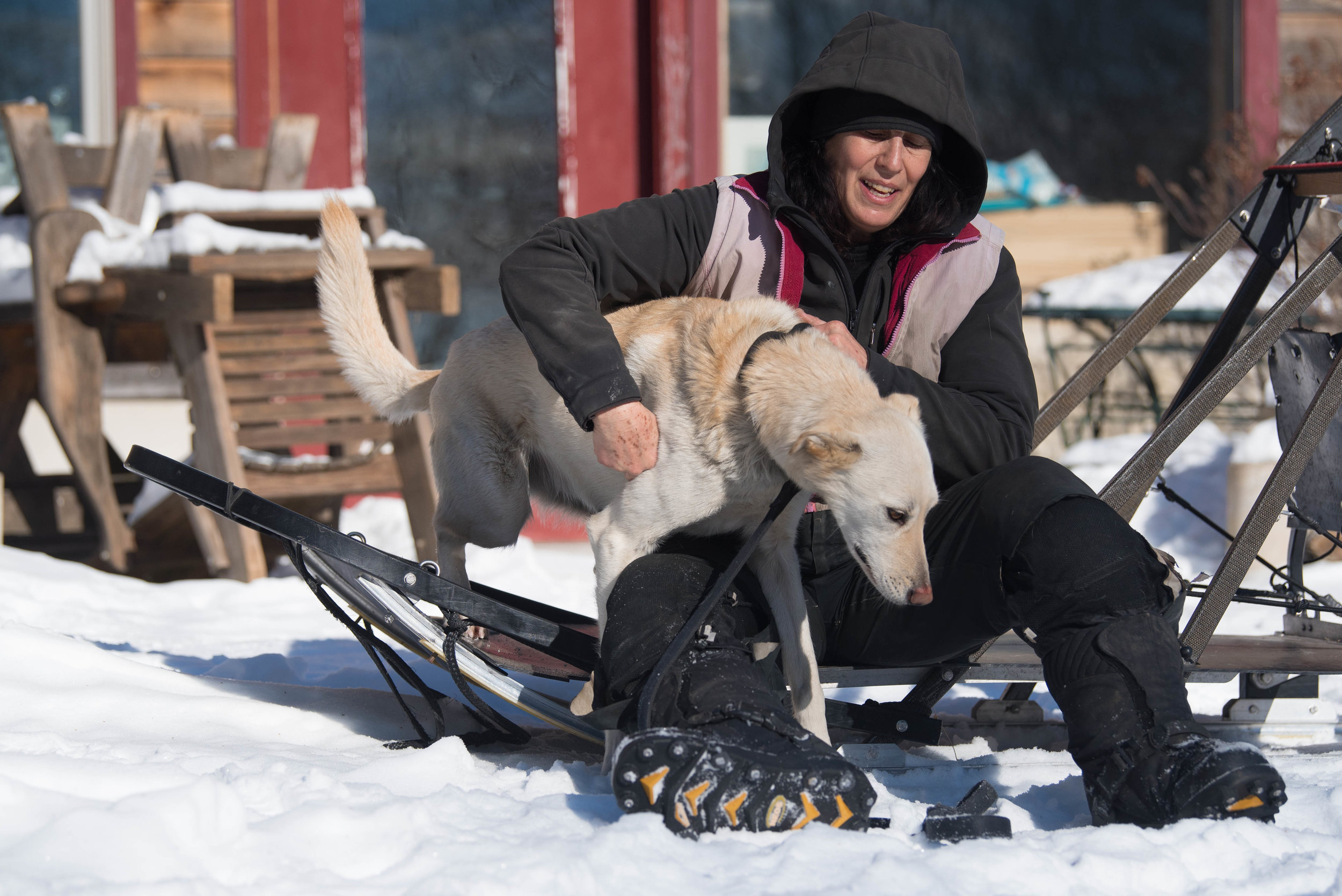 Marla Brodsky lives entirely off the grid with her twenty two Alaskan Huskies in Massachusetts.  The property is completely self sufficient, no electricity, and no plumbing.  Dog waste is composted and shared with a local farm, and raw meat unfit for human consumption is obtained from local slaughterhouses to feed the dogs.