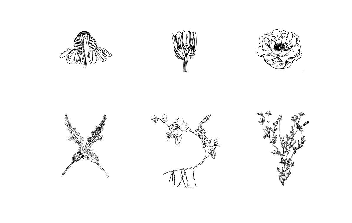 Various illustrations for the packaging and branding of TVAL's skincare line.
