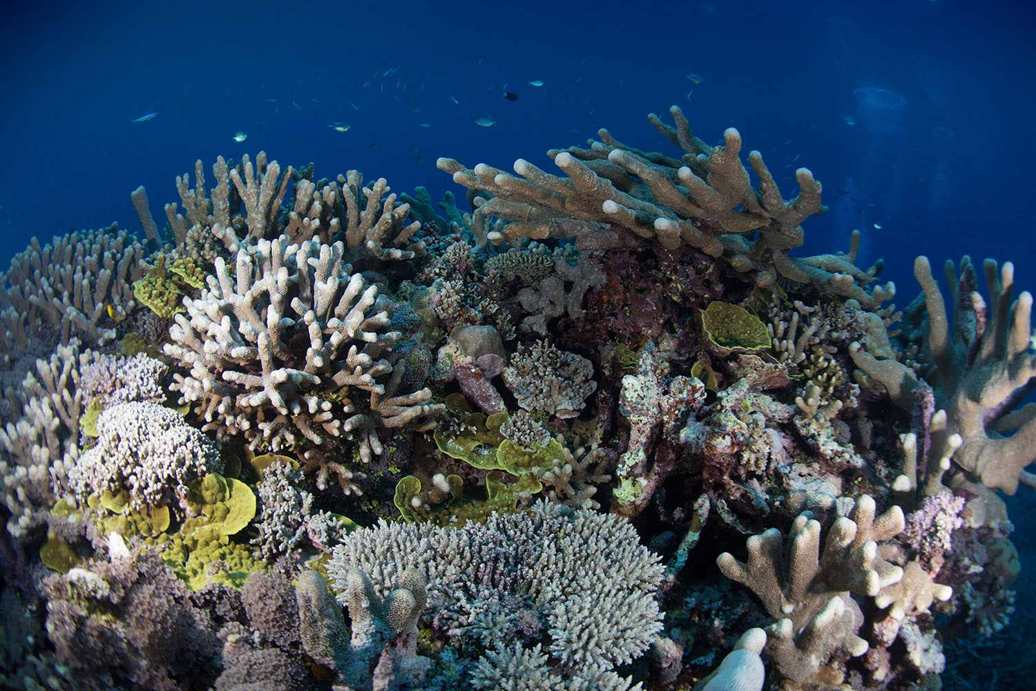 Hard-and-Soft-Coral-Reefs-2.jpg