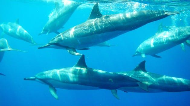 Dolphin-Swim-image-1.jpg