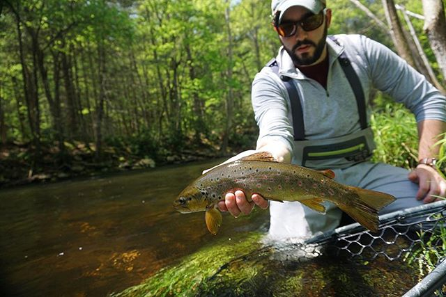 Big, healthy, fins. A fine wild brown from earlier this spring. . . . . #fishing #flyfishingnation #flyfishing #flyfishingguide #catchandrelease #flytying #fishing #browntrout #wildtrout #troutfishing #trout #flyfishingjunkie #flyfishingaddict #cwcfishingco #getoutthere #explore #adventure #intothewild #wild #letemgosotheycangrow #troutbum #wildbrowntrout #orvis #orvisflyfishing #flyfishingphotography #onthefly
