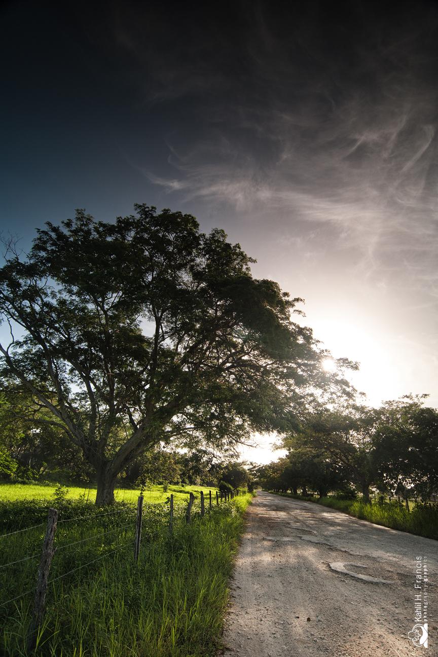 Caymanas