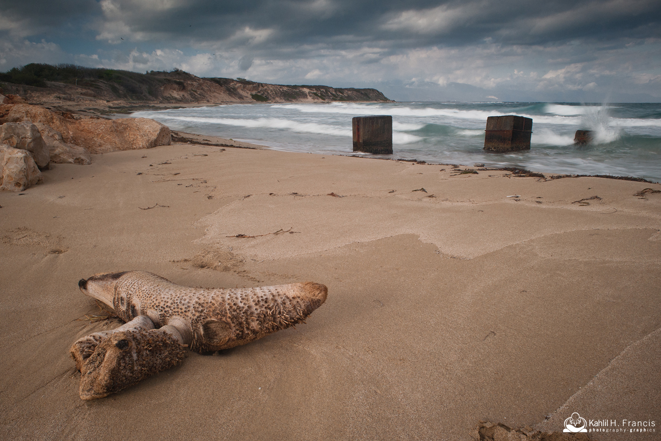 Beach In Hellshire