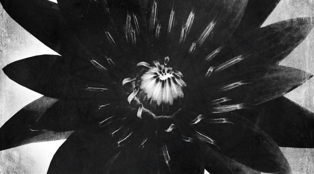 3.Black Lotus.jpg