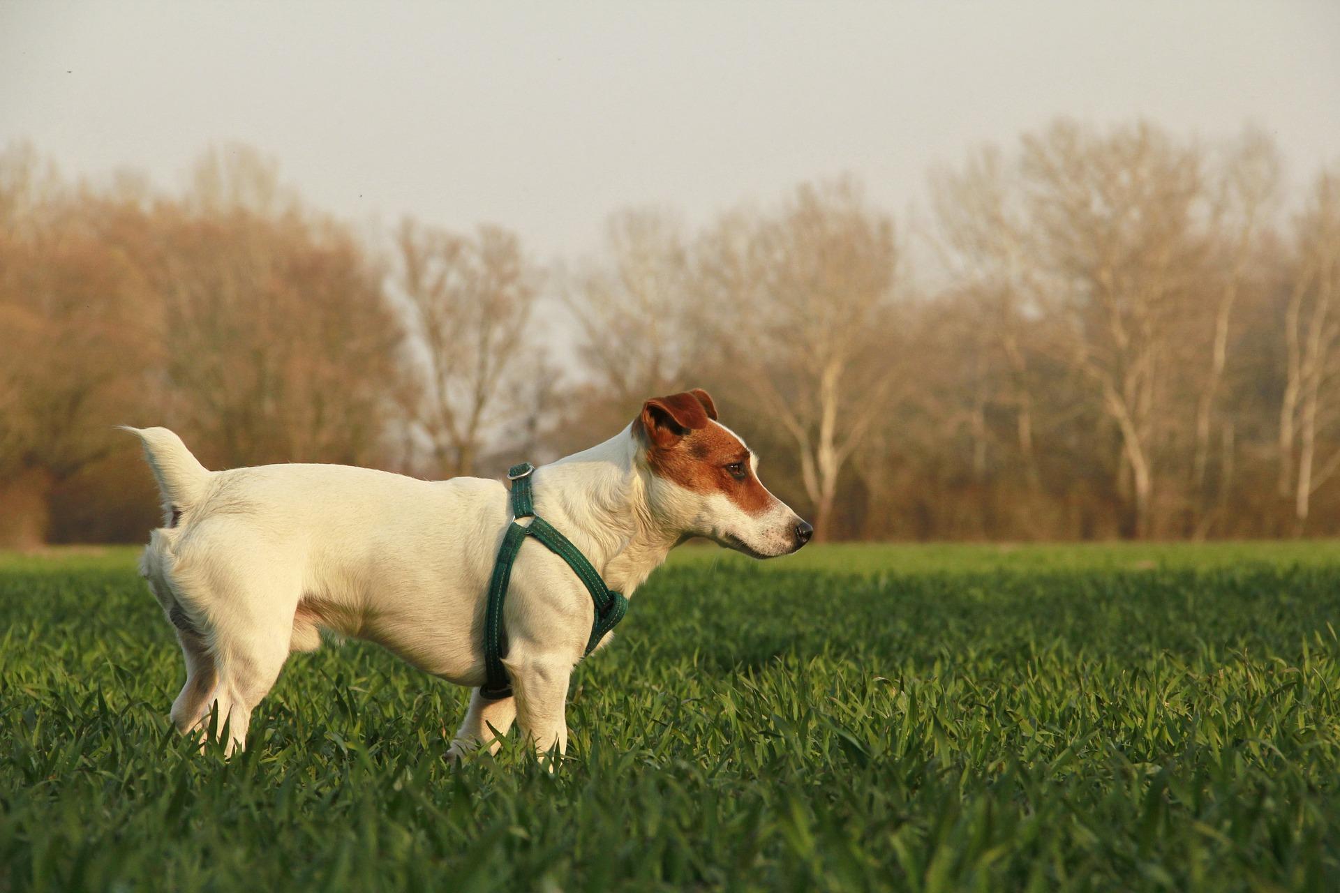 dog-1653836_1920.jpg