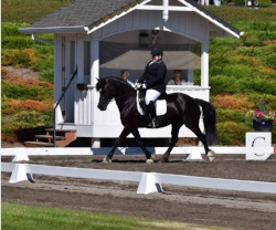 Dressage at DevonWood 2017