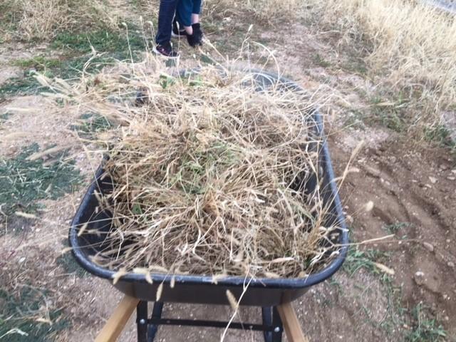 wheelbarrow full.jpg