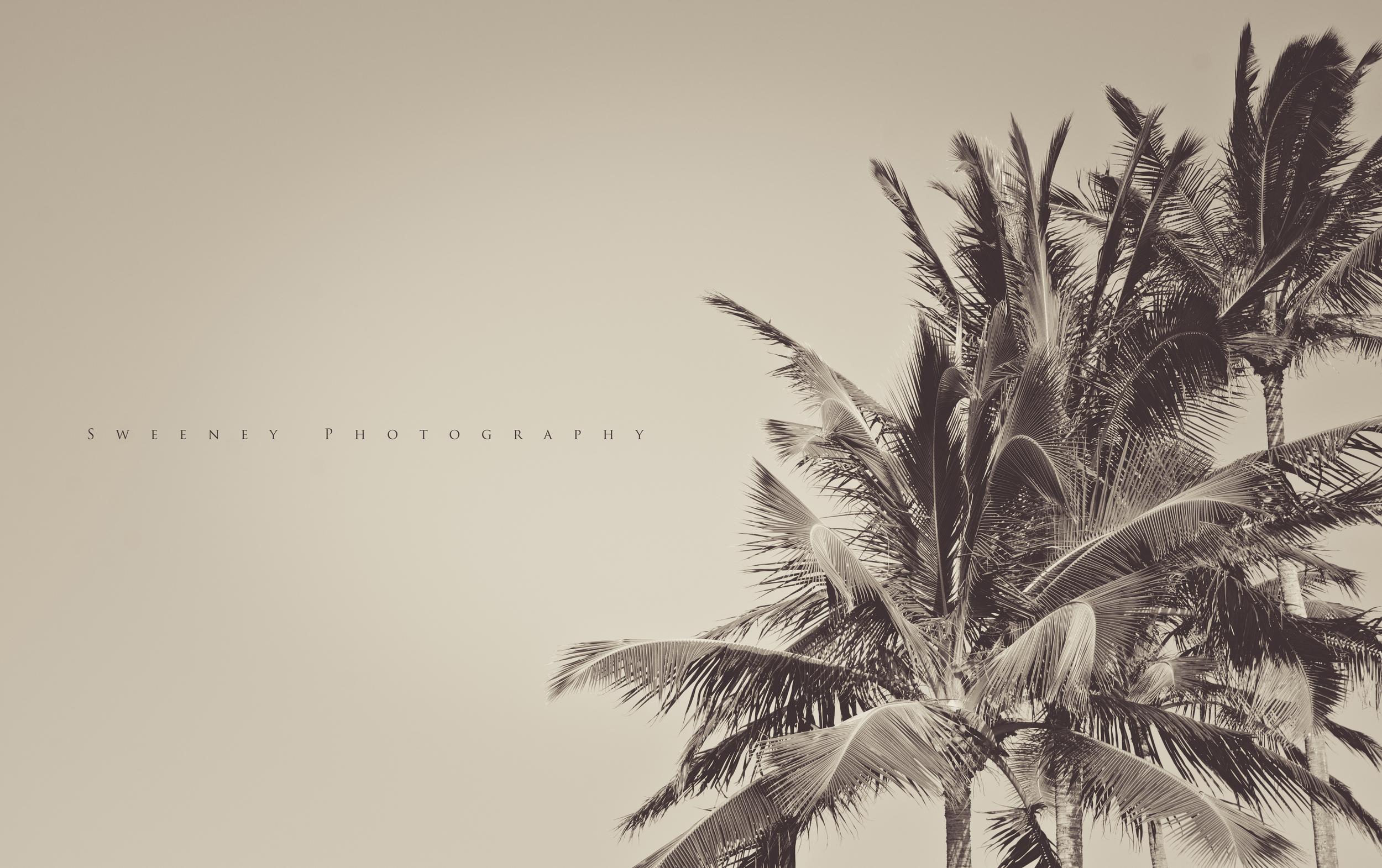 Black Palm.jpg