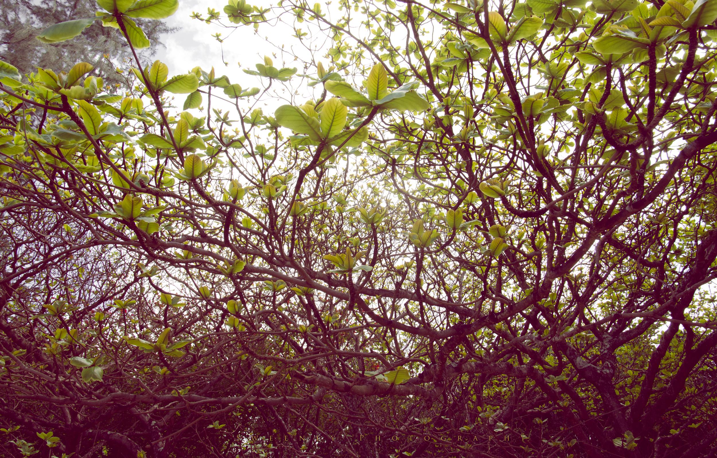 Green leaf tree.jpg