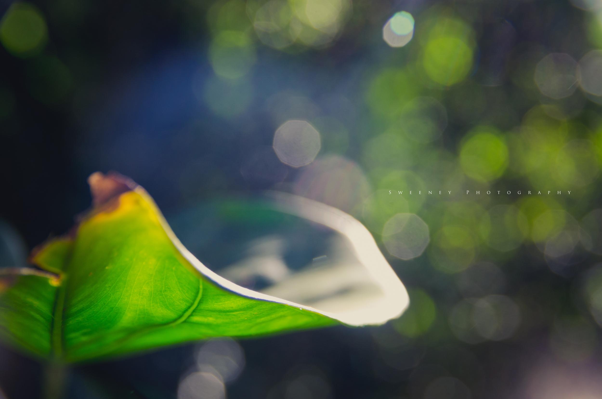 Leafy.jpg