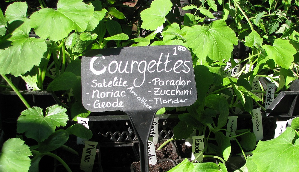 3. Courgettes.jpg