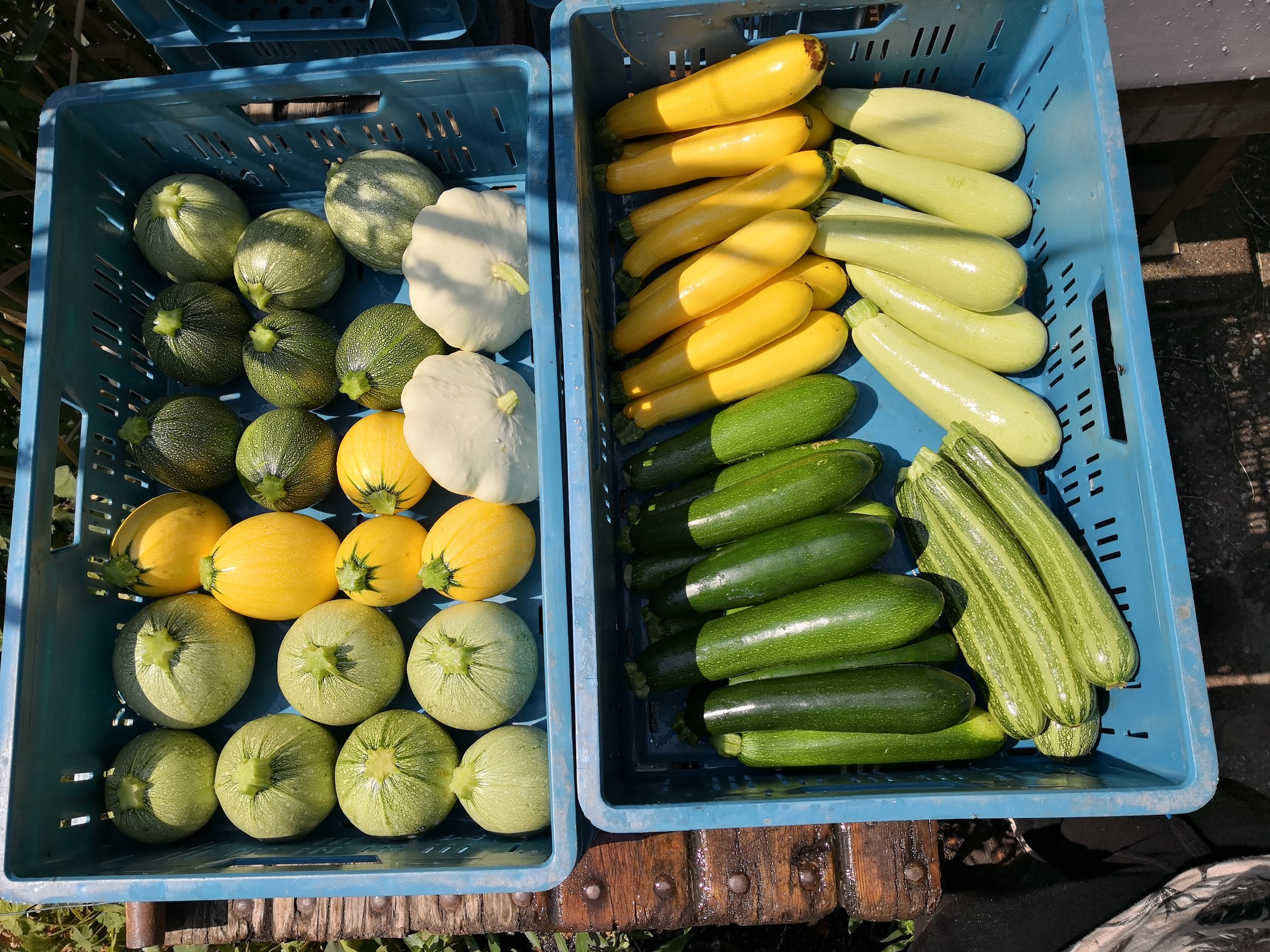 07-18 courgettes.jpg