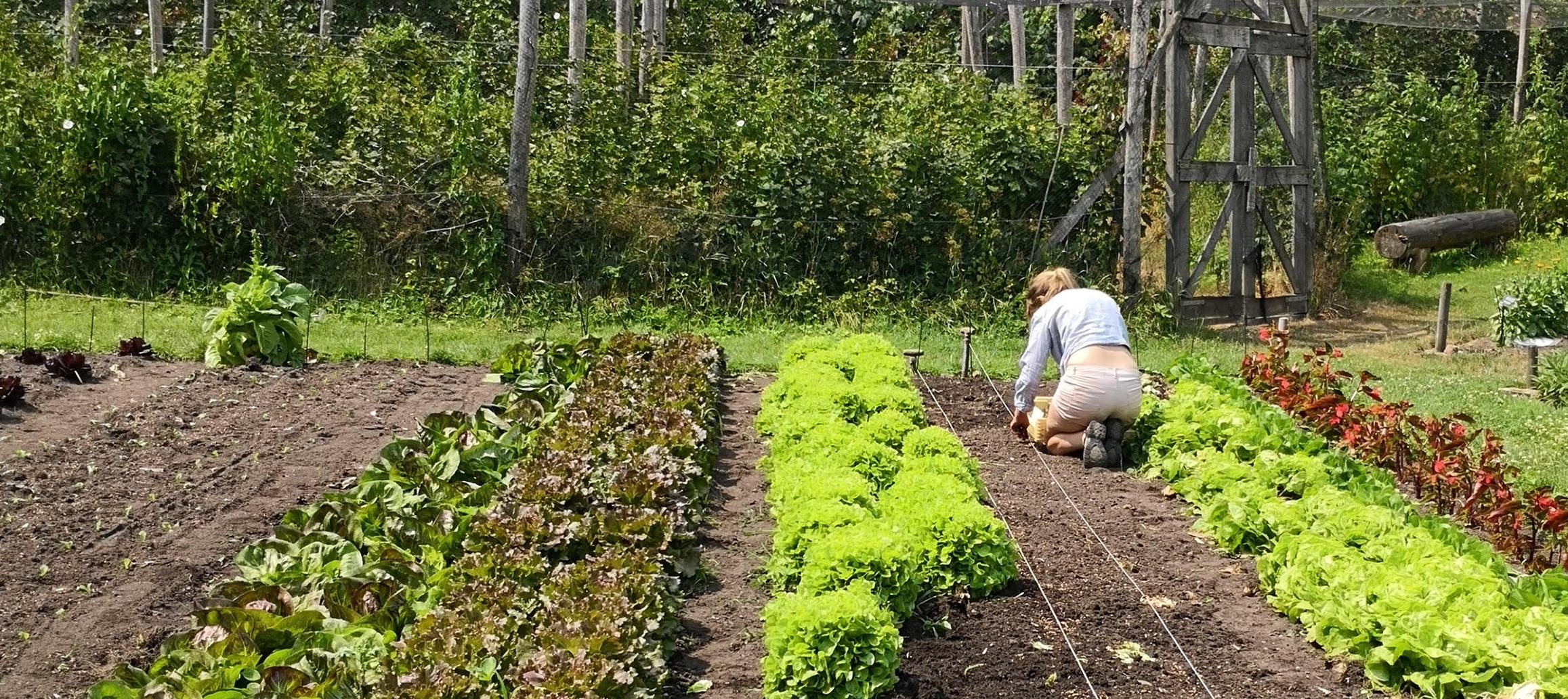 08-18 Esther sla planten 2.jpg