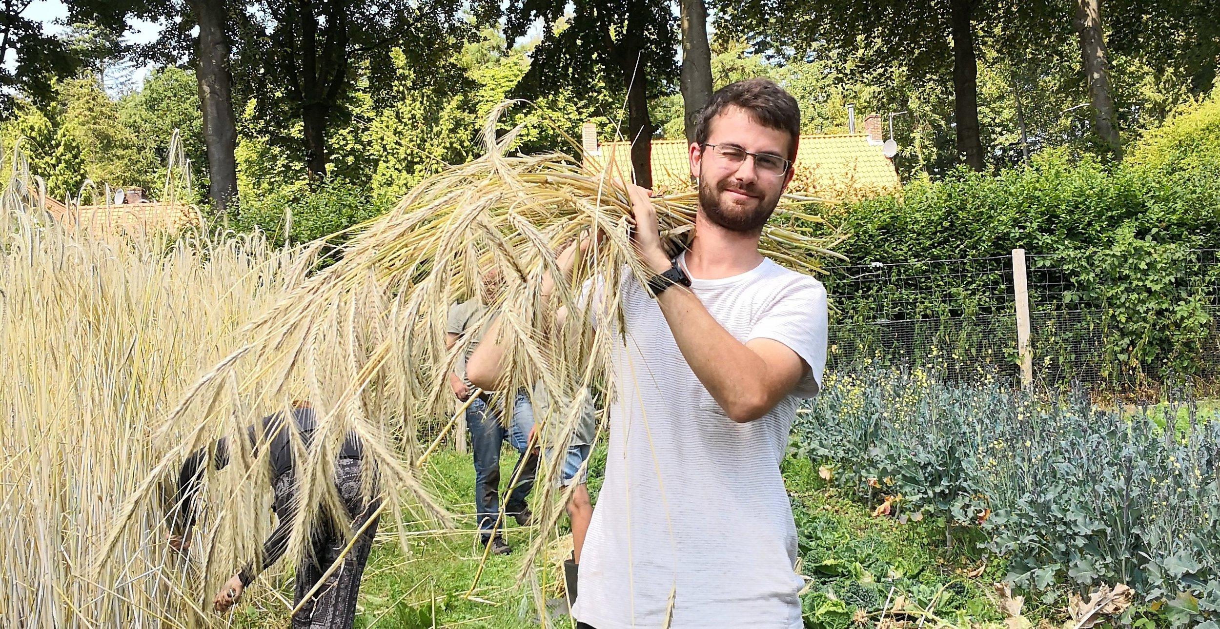 07-18 Rogge oogsten Arthur 2.jpg