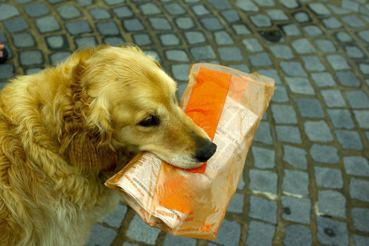 If you're lucky, you may even get your newspaper delivered to you by our very own golden retriever, Chester!