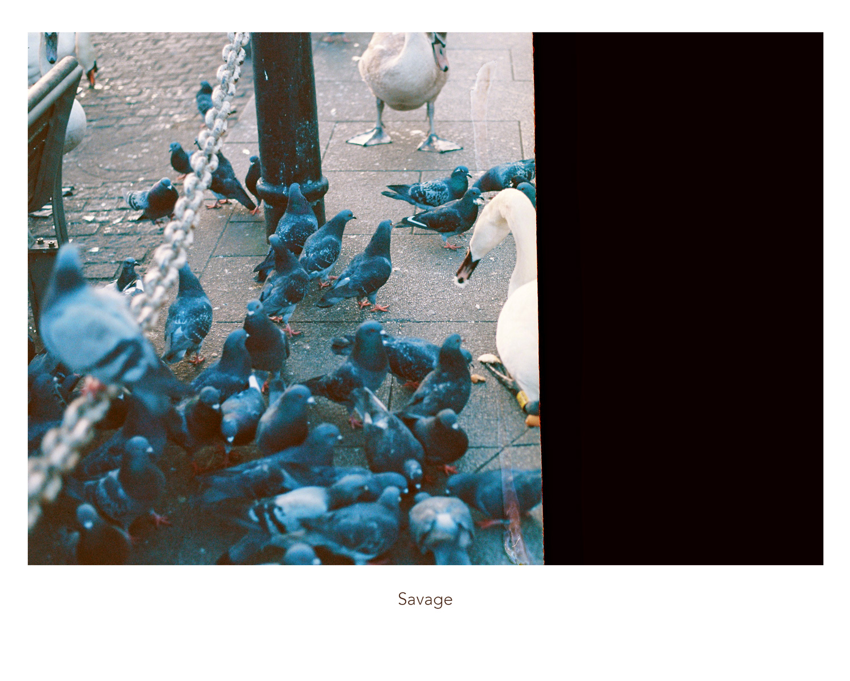 35_Savage_web.jpg