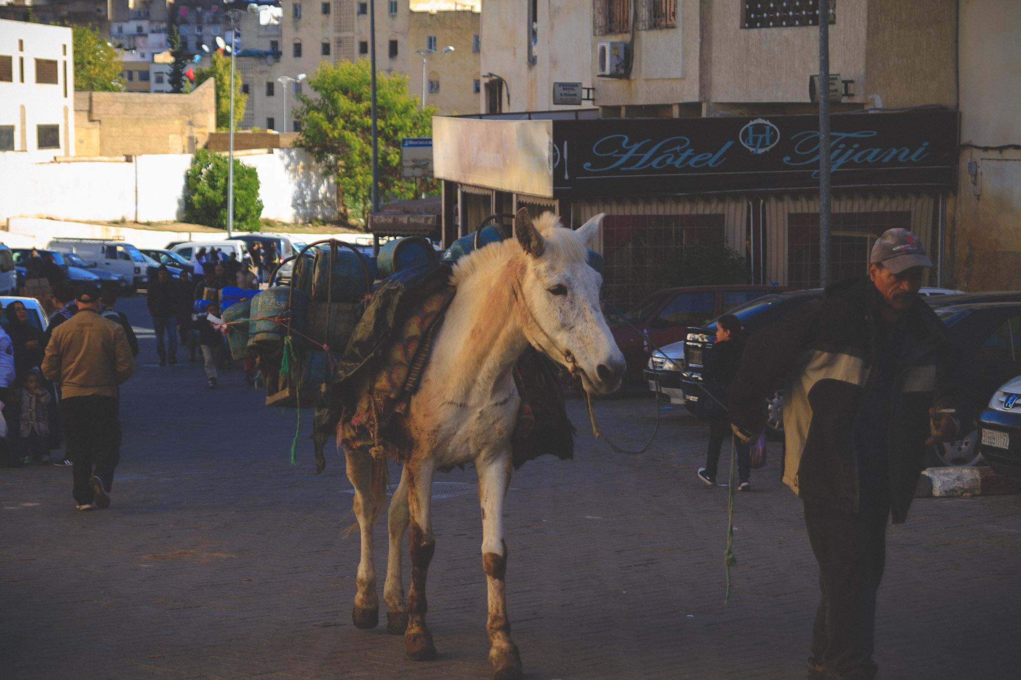 morocco_rabat_fez_casablanca_lesleyade_photography-22.jpg