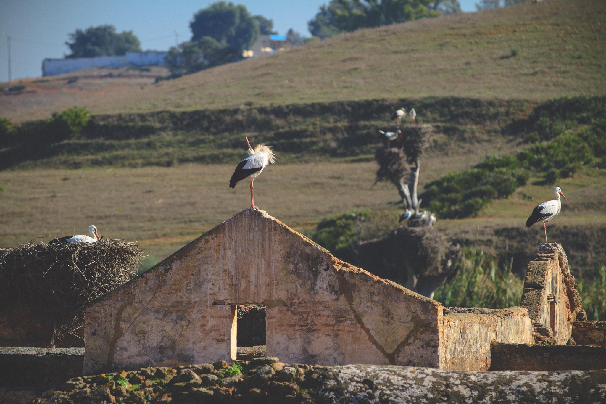 morocco_rabat_fez_casablanca_lesleyade_photography-23.jpg