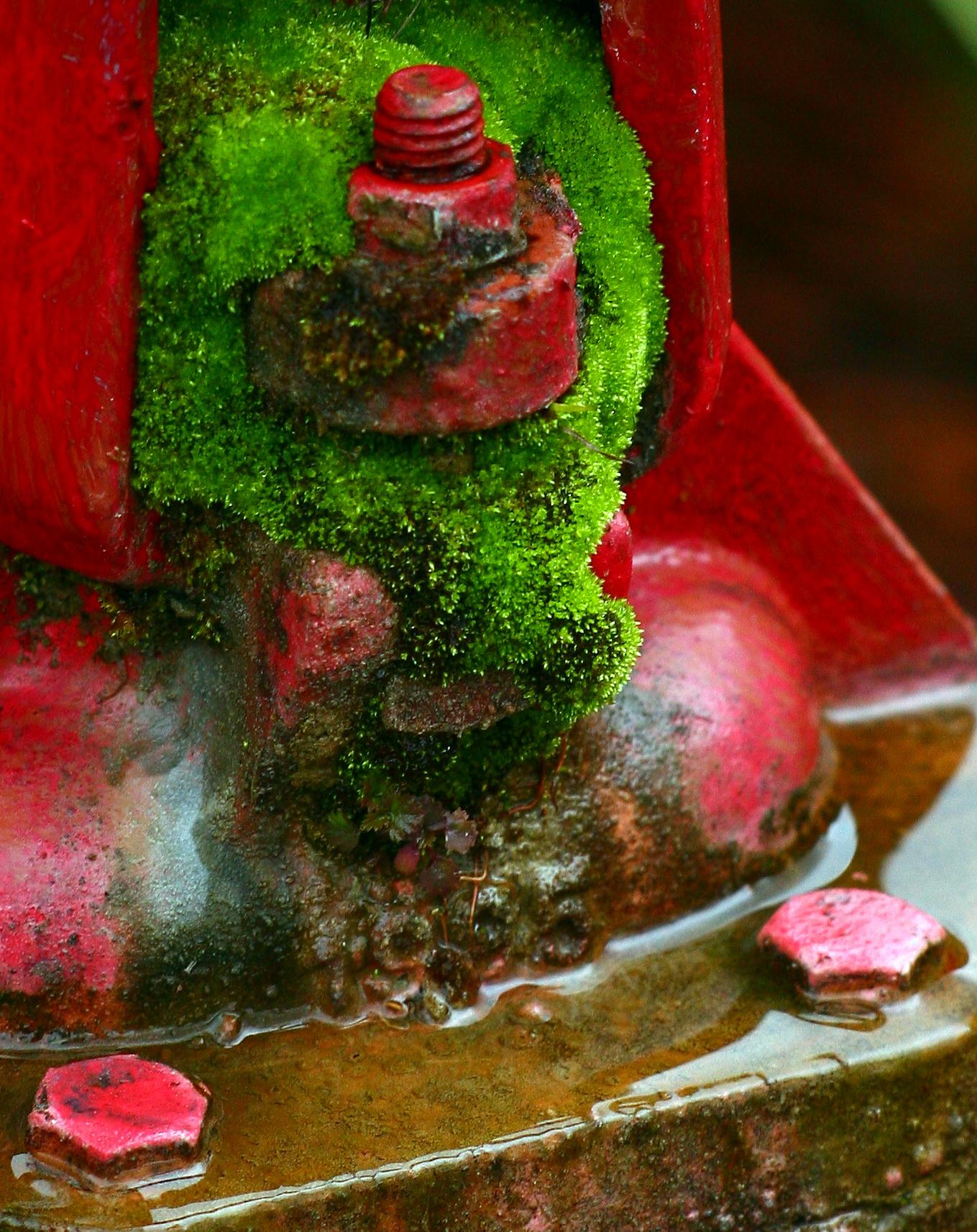 mossyhydrant1.jpg
