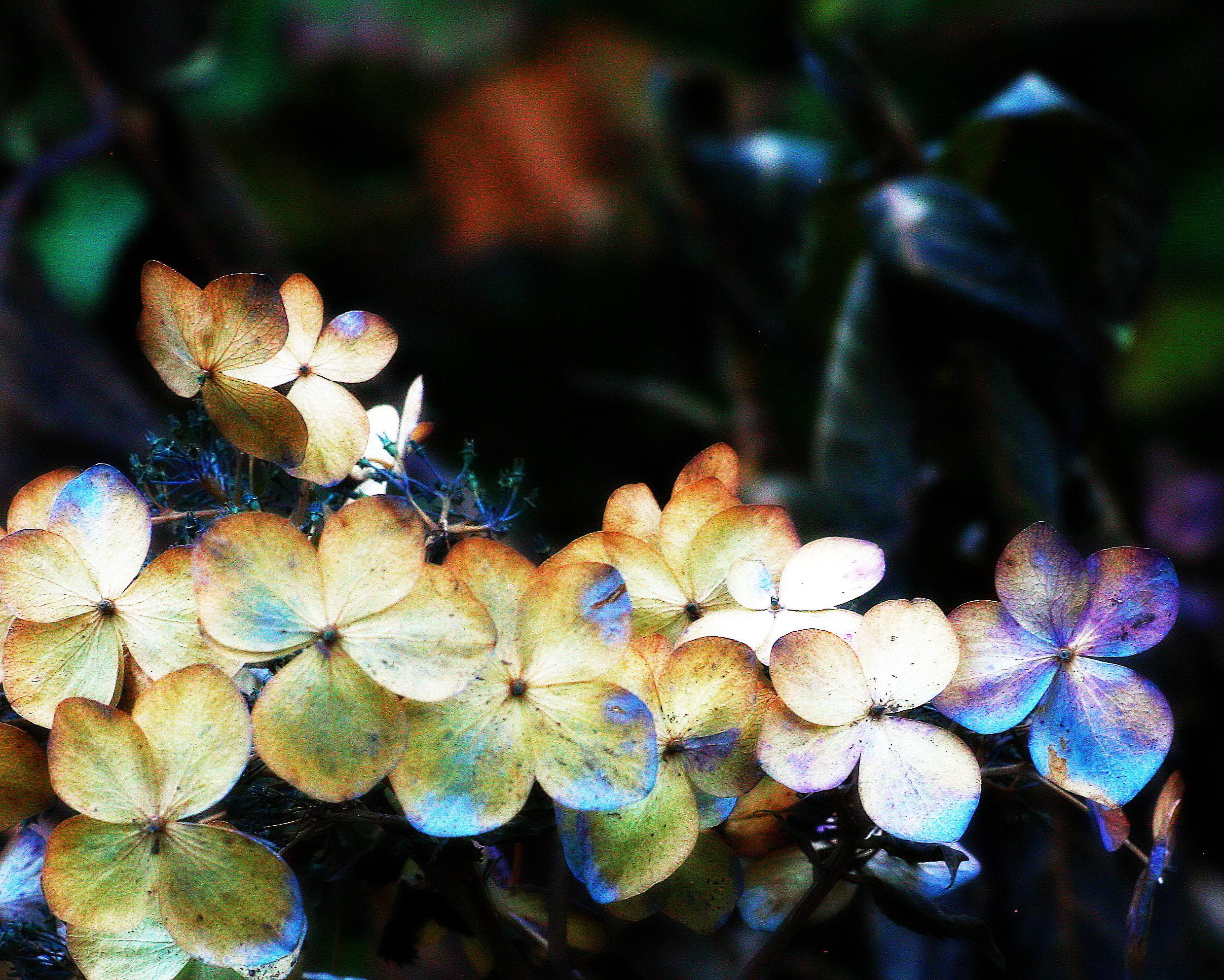 deadflowers2.jpg