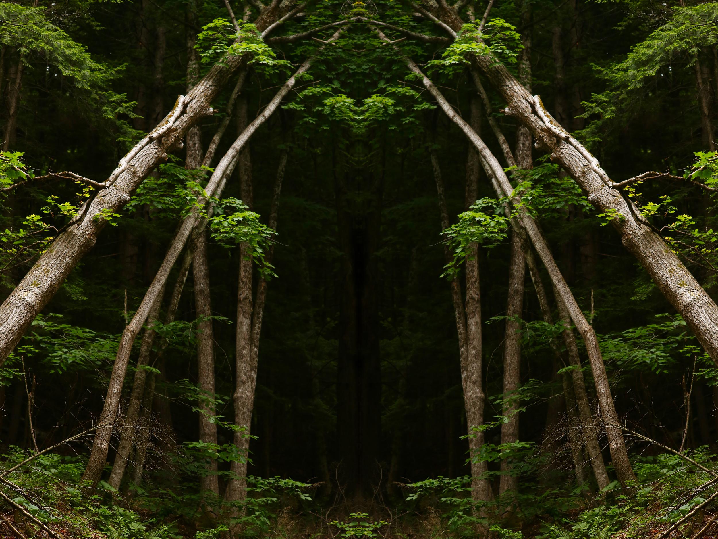 treegate4.jpg